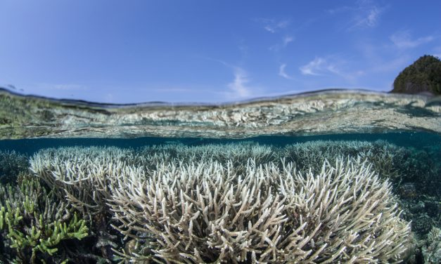 Research brief: Do climate change cause longer and more frequent marine heatwaves?
