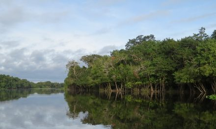 Research brief: Why record-breaking droughts had very different impacts on Amazon forests