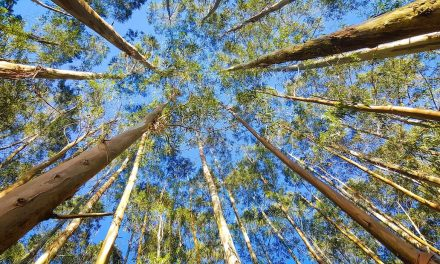 Some trees may survive future heat better than expected