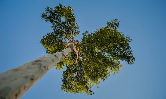 Research brief: More accurate prediction of tree mortality during droughts