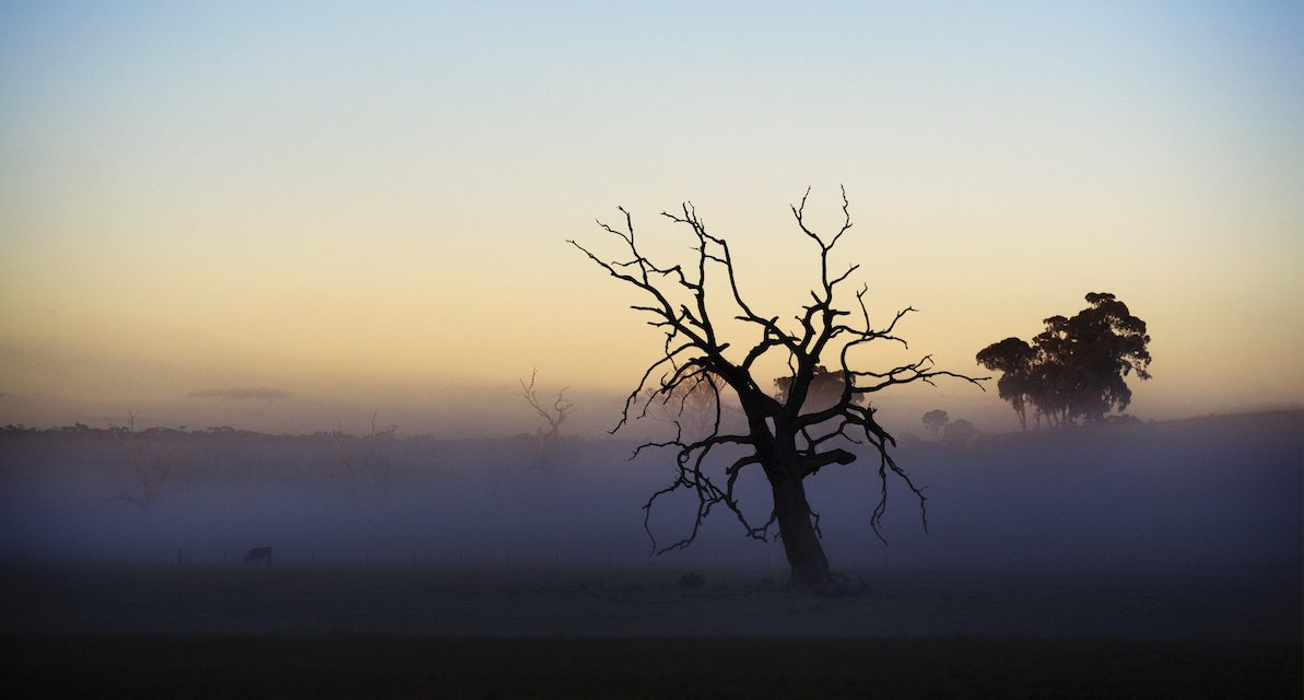 Research brief: Predicting the risk of drought-induced tree mortality in Australia
