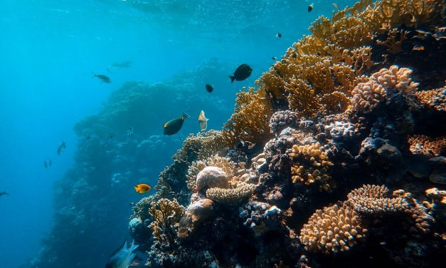 Research brief: Do aerosols produced by coral reefs influence climate?